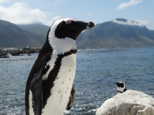 pinguins 02